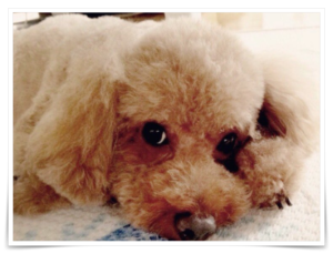 横浜流星 家族構成 両親 弟 愛犬