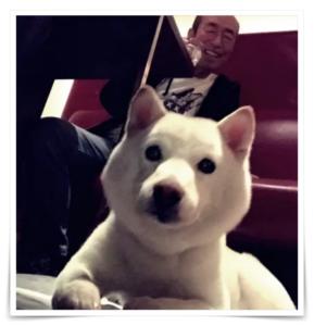 志村けん愛犬