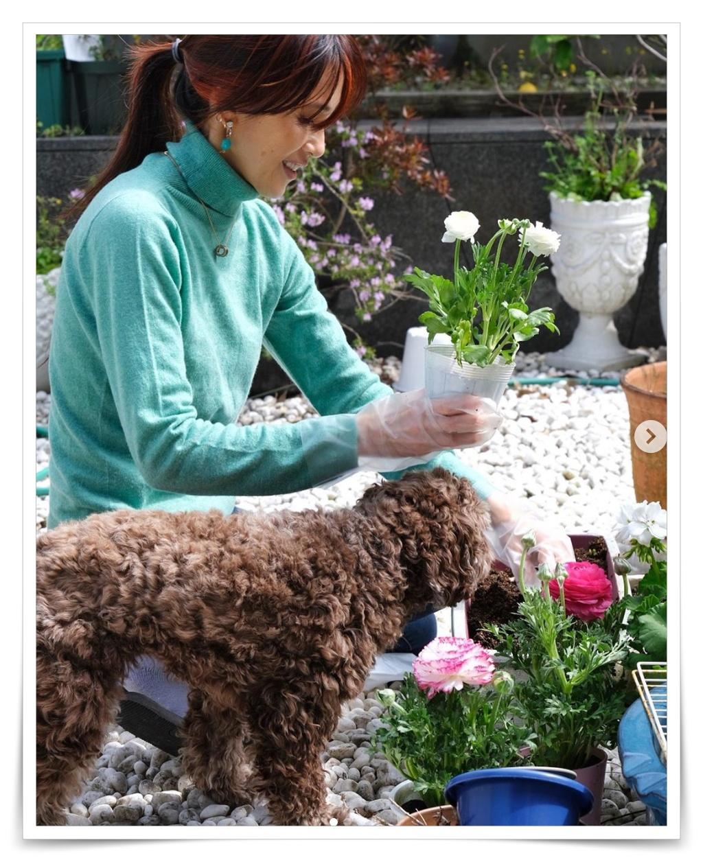 工藤静香と犬の画像