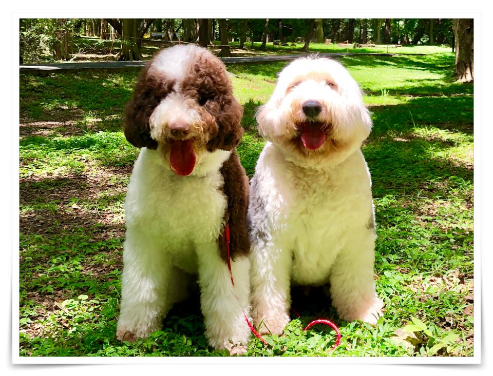 キムタクの犬の画像