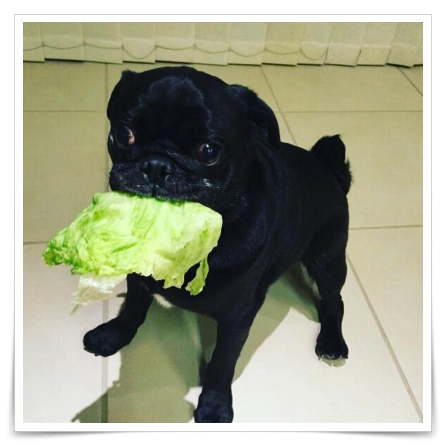 キムタク飼ってる犬種