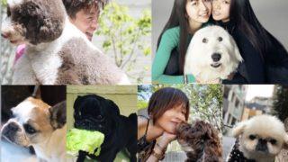 キムタク、工藤静香、cocomi,kokiの犬の画像