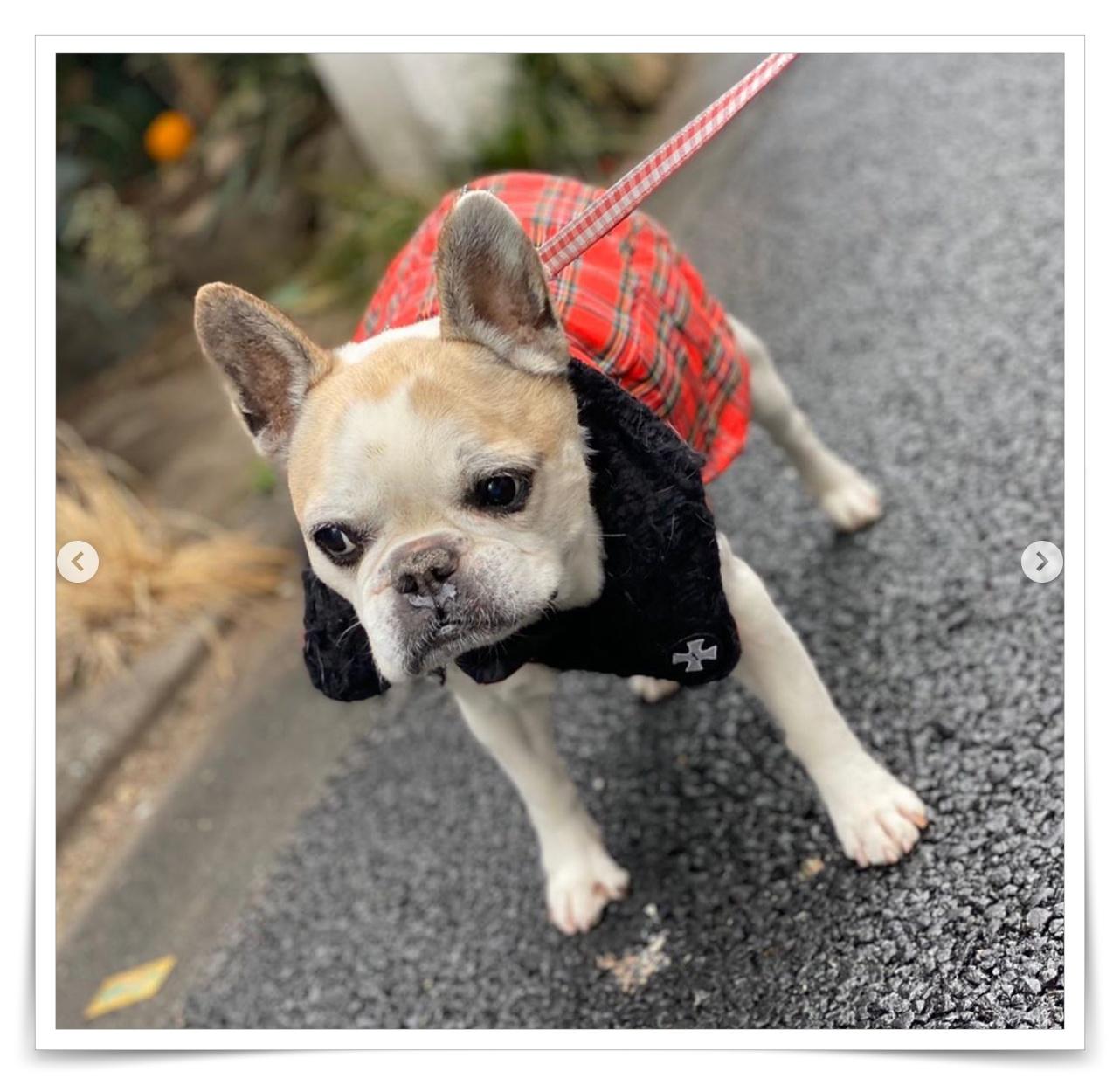 工藤静香とキムタク、cocomiの犬の画像